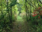 Path backwards